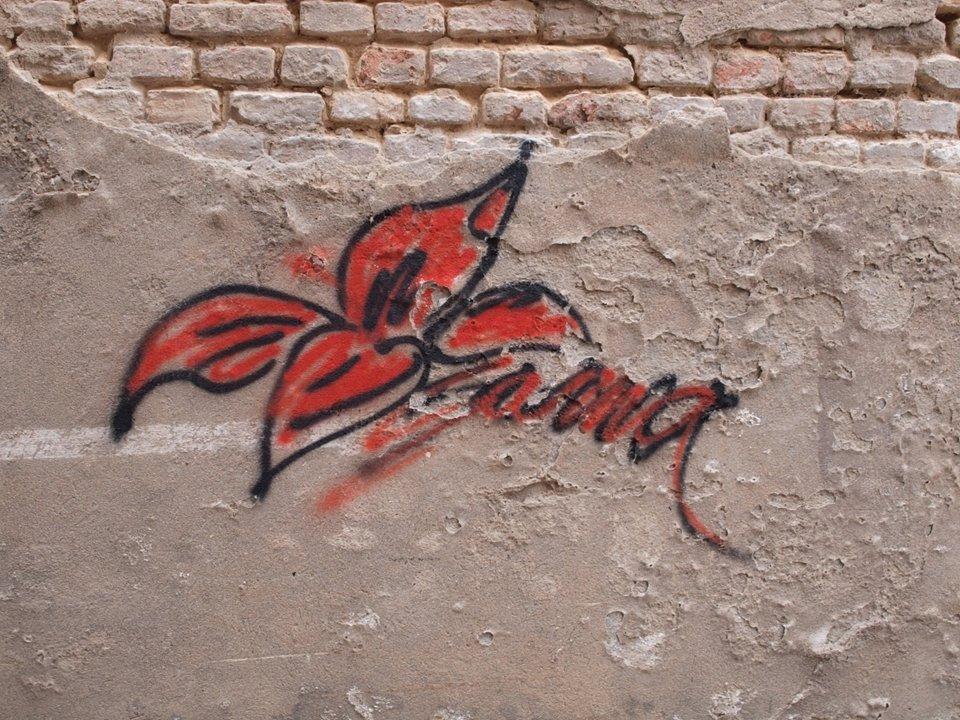 Schimmel auf Tomate – die Welt zwischen Rasterelektronenmikroskop und Graffitis