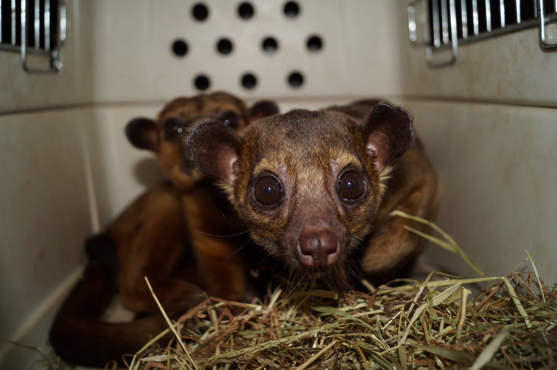 Foto: Zoo Dortmund