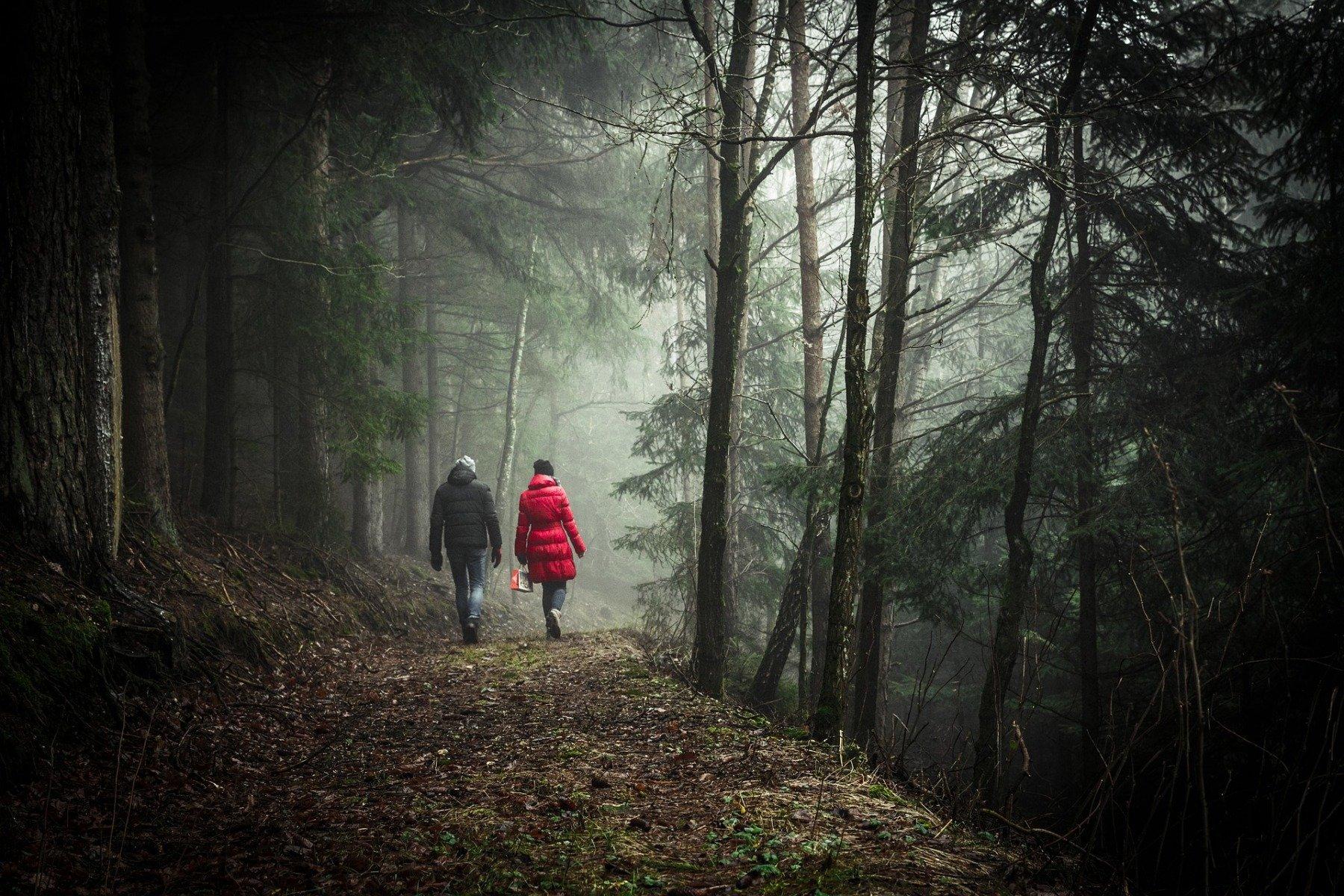 Auch im Winter hat der Wald seine Reize. (Symbolfoto: pixabay)