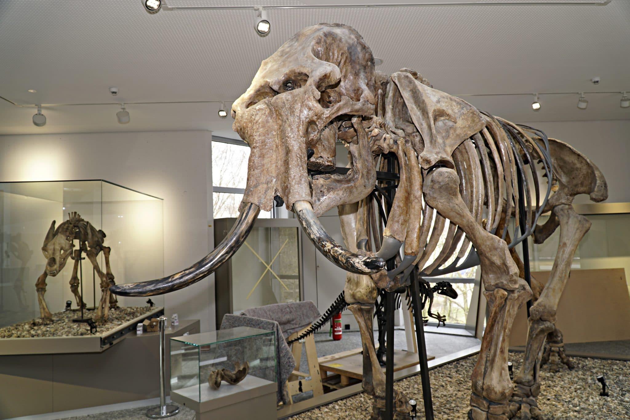 Die Dortmunder*innen  müssen in der nächsten Zeit auch auf den Besuch im Naturmuseum verzichten. (Foto: Wir in Dortmund)