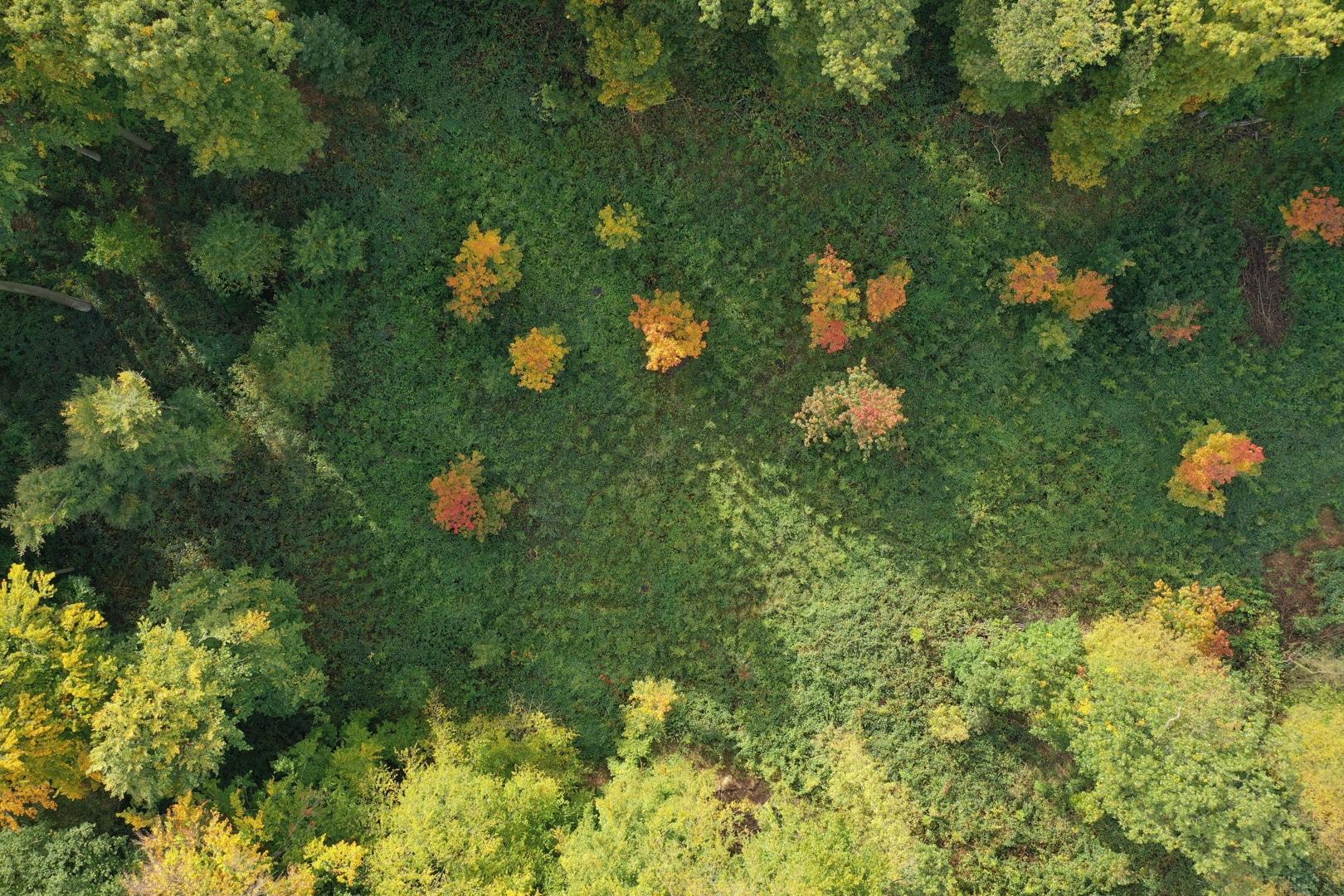 Die gemeinsamen Wanderungen führen durch den Rahmer Wald.  (Foto: Wir in Dortmund)