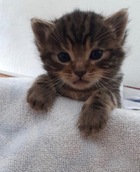 Wer nimmt mich? Ich bin auch ganz lieb ... (Fotos: Katzenschutzbund)
