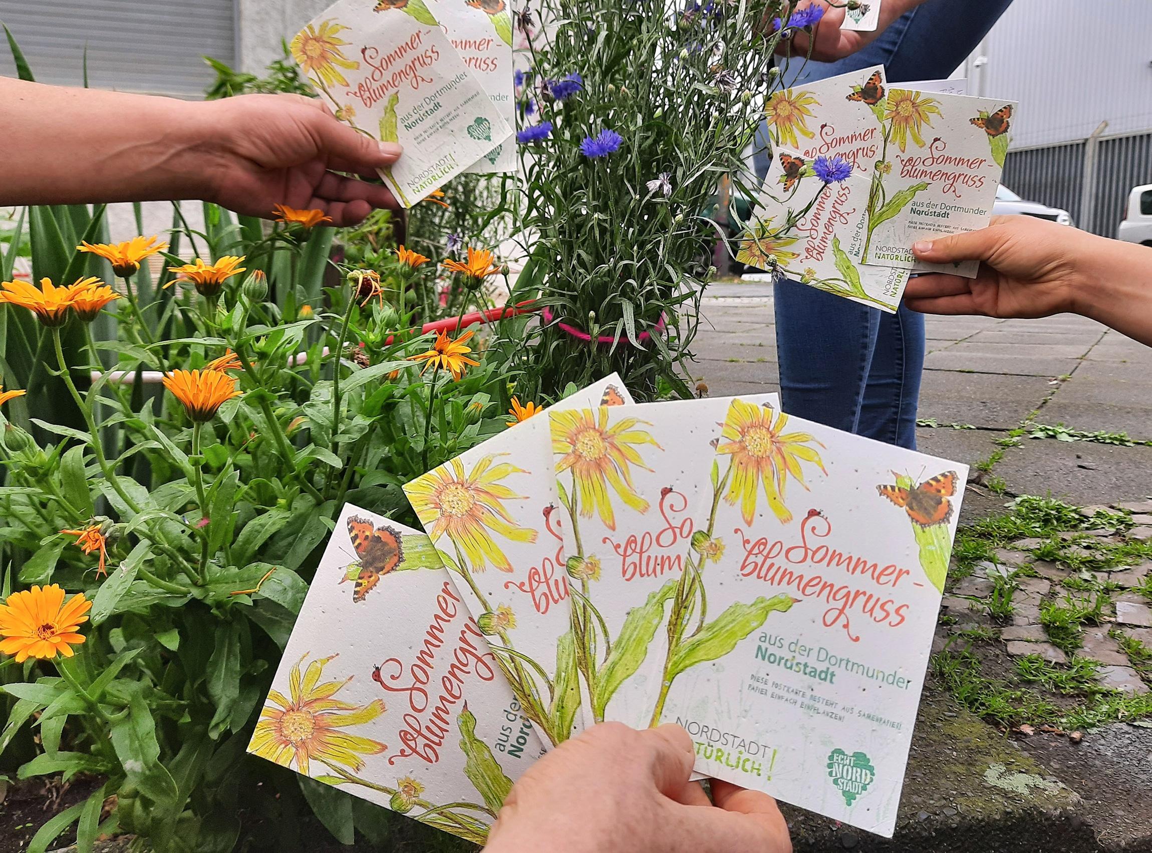 Die Postkarten sind Grüße mit 'wachsendem' Inhalt: Sie enthalten Blumensamen zum Einpflanzen. (Foto: QM Nordstadt)