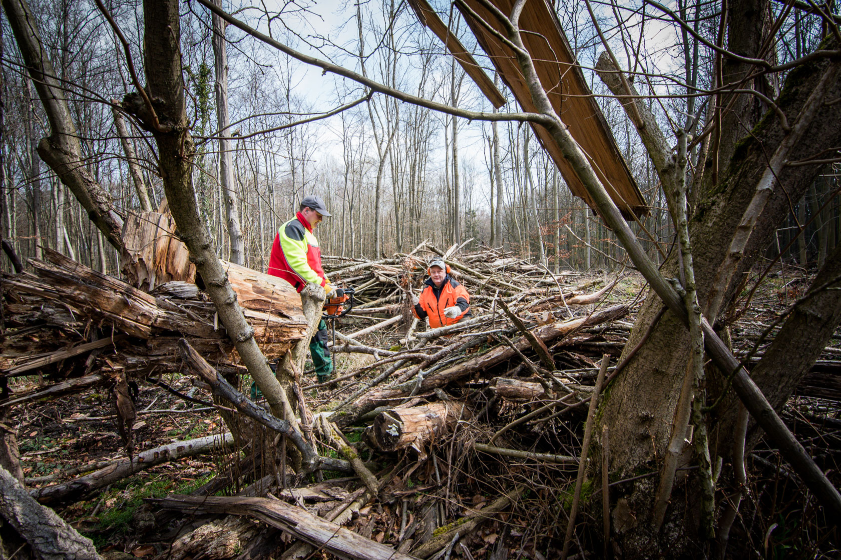Meik Senftleben und Thomas Koentker (beide Forstwirte der Stadt Dortmund) bohren Löcher für die neuen Buchen und pflanzen sie anschließend. (Fotos: Stadt Dortmund/Roland Gorecki)