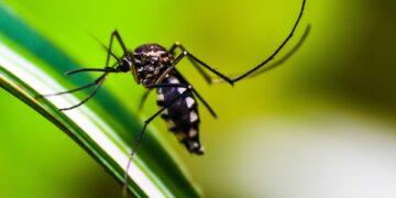 Moskitos sind Überträger der Malaria! (Foto: pixabay)