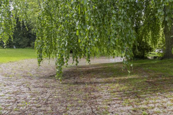 Der Frühling ist da, aber nicht der Teich