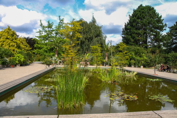 Online-Stammtisch mit dem Leiter des Botanischen Gartens Rombergpark