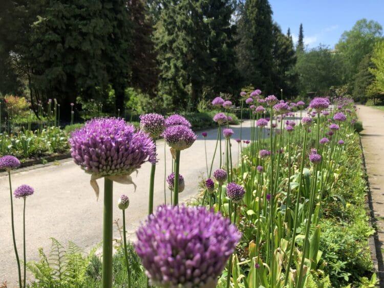 In den nächsten Tagen verspricht das Wetter sonnig zu werden – da bietet sich ein Spaziergang im Botanischen Garten an. (Foto: Botanischer Garten Rombergpark)