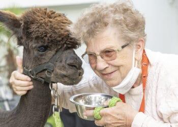 Allen tierischen Seniorenheim Besuchern war gemein: Tiefenentspannt, zutraulich und durchgehend hungrig. Die Bewohner hatten großen Spaß! (Fotos: Wir in Dortmund)