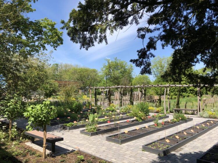 Blick in den Hortus Medicus. (Foto: Botanischer Garten Rombergpark)
