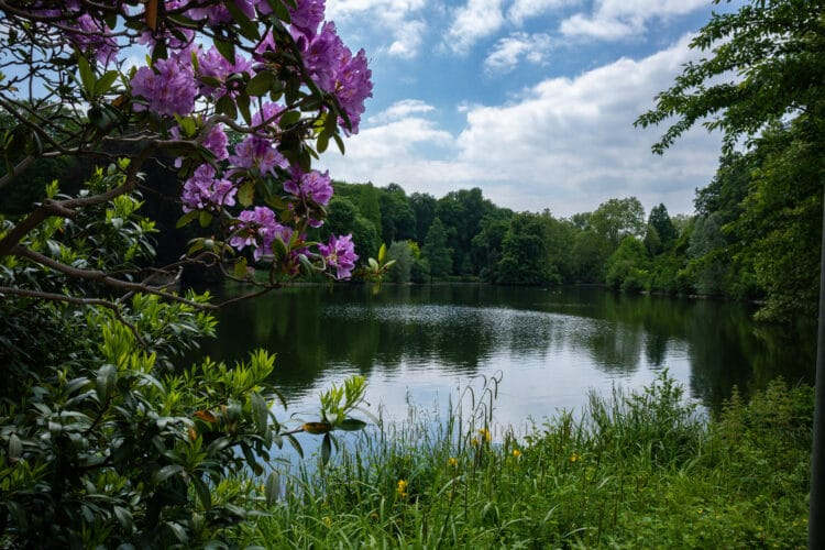 Auch der Botanische Garten Rombergpark gehört zu den teilnehmenden Denkmälern. (Foto: Wir in Dortmund)