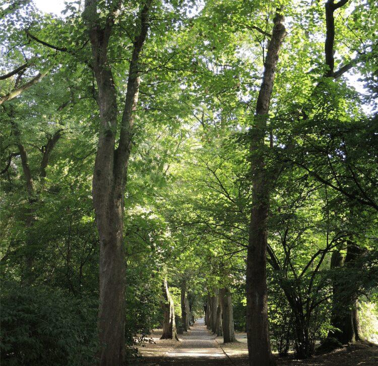Es wird auch eine Führung über den jüdischen Teil des Ostfriedhofs angeboten. (Archivfoto: Wir in Dortmund)