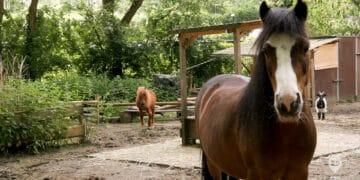 Zu Besuch in der »Mini-Ranch-Dortmund«