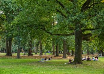 Der Westpark fungiert als citynahes Erholungsgebiet, in letzter Zeit kam es dort aber sogar zu Gewaltdelikten. (Archivfoto: Wir in Dortmund)