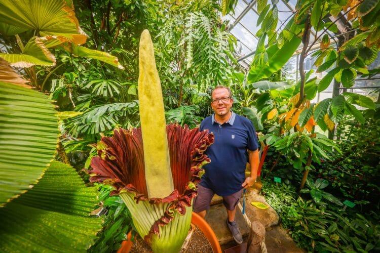 Dr Patrick Knopf, Direktor des Botanischen Gartens Rombergpark, freut sich über das Erblühen von David,  der Titanwurz. (Fotos: Stephan Schütze/Wir in Dortmund)