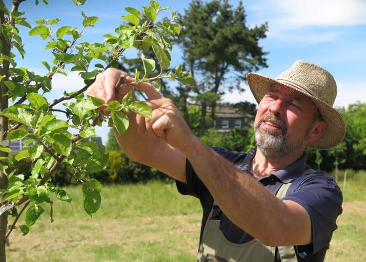 An einem einjährigen Apfelbaum zeigt Jochen Helle den ersten erfolgten Schnitt. (Fotos: Wir in Dortmund)