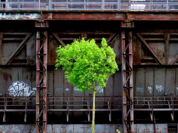 Gabriele Wirths zeigt in ihren Fotoarbeiten eine andere Ambivalenz der Stille. Orte der Ruhe, wie sie uns die Natur bietet, strahlen uns an mit ihrem unschuldigen Grün vor den Chiffren unserer industriell geprägten Zivilisation. (Fotos: Künsterinnen)