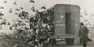 Taubenauflass der Reisevereinigung Union Castrop in den 1960er Jahren. (Foto: LWL/Helmut Orwat)