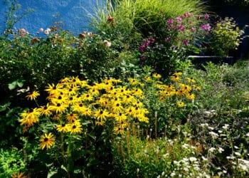Blütenpracht bald auch in Ihrem Garten. (Foto: Wir in Dortmund)